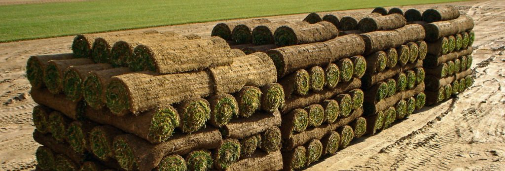 Virginia Daily Fresh Cut Sod